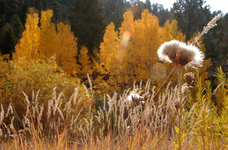 20081002_ASPENS_FALL_COLOR_FIELD