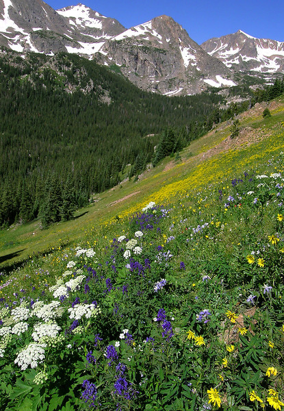 20050719_ARAPAHO_PASS_FLOWERS_WIDE