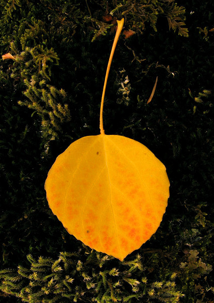 20060930_IMAGES_FALL_AUTUMN_LEAF