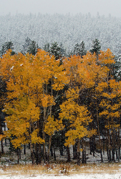 2004_FALL IMAGES_FEATURES_ASPEN