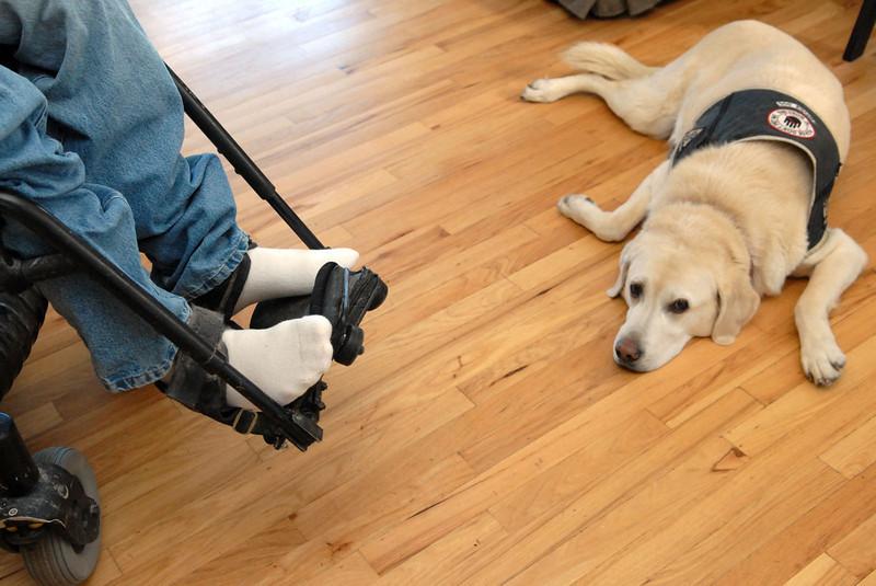 20110117_CALLAHAN_SERVICE_DOG