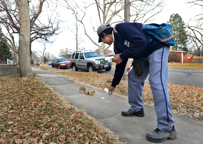 """Jose Chavez feeds peanuts to squirrels along his delivery route in Longmont on Thursday, Dec. 13, 2012. Despite being diagnosed with multiple sclerosis in 2001, Chavez has been delivering mail along the same route for 12 years. For more photos and video visit  <a href=""""http://www.TimesCall.com"""">http://www.TimesCall.com</a>.<br /> (Greg Lindstrom/Times-Call)"""