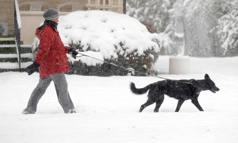 20091028_SNOW_WEATHER_STORM_BROWN_DOG
