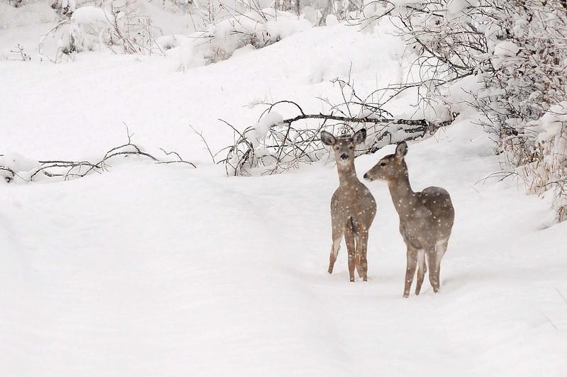 20091028_SNOW_JB_7