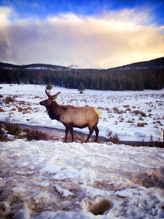 This photo was taken by Amy John Friday, April 26th in Rocky Mountain National Park. (Photo submitted by Amy John)