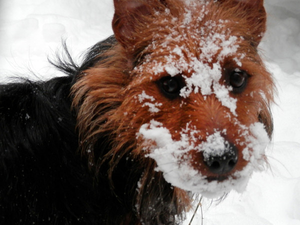Barnaby plays in the snow Sunday, Feb 24th. (Photo submitted by Wileen Wittfelt)