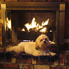 Coco stays warm on a cold winter night in Longmont. (Photo submitted by Pat Harbour)