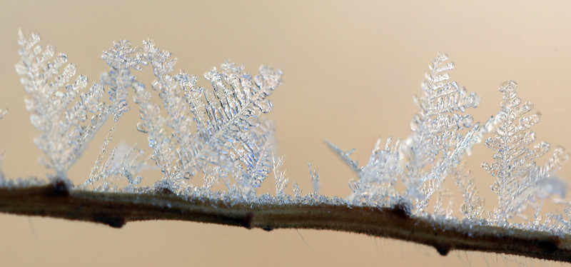 Ice crystals outside the home of Cliff DeJong on Friday Dec 28, 2012. (Photo submitted by Cliff DeJong)