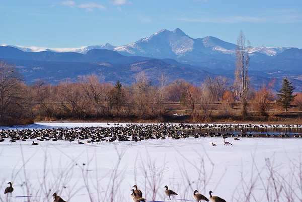 Geese at Golden Ponds Wednesday, January 16th. (Photo submitted by Ronnie Porter)