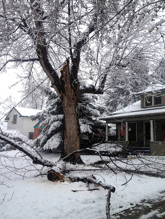 A downed tree limb in front of a home at 5th Avenue and Gay Street, Wednesday May 1, 2013. (Photo submitted by Jose A. Morin)