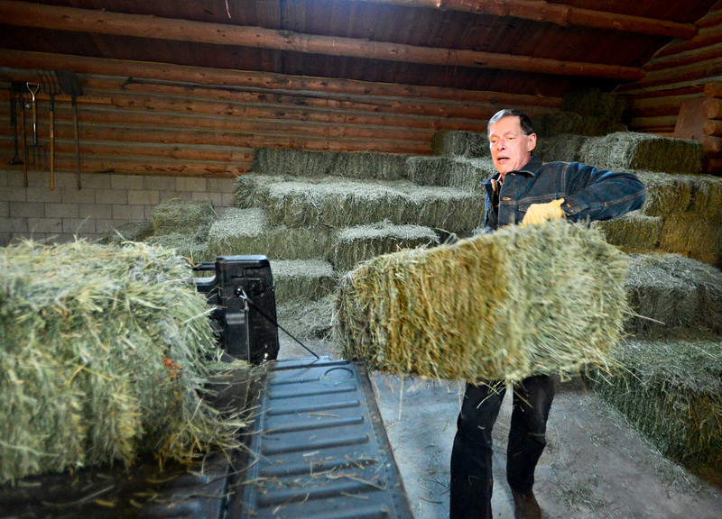 "Bill Berg loads hay into his tractor before feeding his small herd of cattle at Ridge Ranch in Hygiene on Thursday, Jan. 31, 2013. For more photos and a video visit  <a href=""http://www.dailycamera.com"">http://www.dailycamera.com</a>.<br /> (Greg Lindstrom/Times-Call)"
