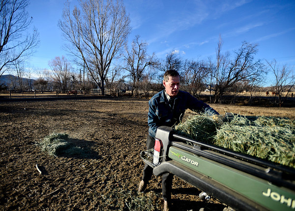 "Bill Berg unloads hay from his tractor before feeding his small herd of cattle at Ridge Ranch in Hygiene on Thursday, Jan. 31, 2013. For more photos and a video visit  <a href=""http://www.dailycamera.com"">http://www.dailycamera.com</a>.<br /> (Greg Lindstrom/Times-Call)"