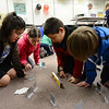 From left: Longmont Estates Elementary fifth graders Payton Graba and Nita Creager, and Westview Middle School sixth graders Jeremiah Medina, and David New use a laser level and several mirrors to reflect the laser onto a target during a light and laser physics demonstration Wednesday March 6, 2013 at Westview. (Lewis Geyer/Times-Call)
