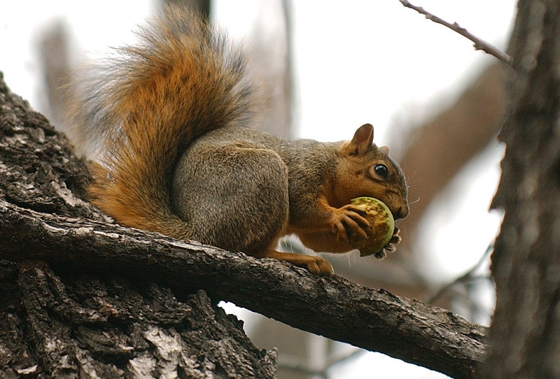20090922_SQUIRRELS_WALNUTS_FEATURE