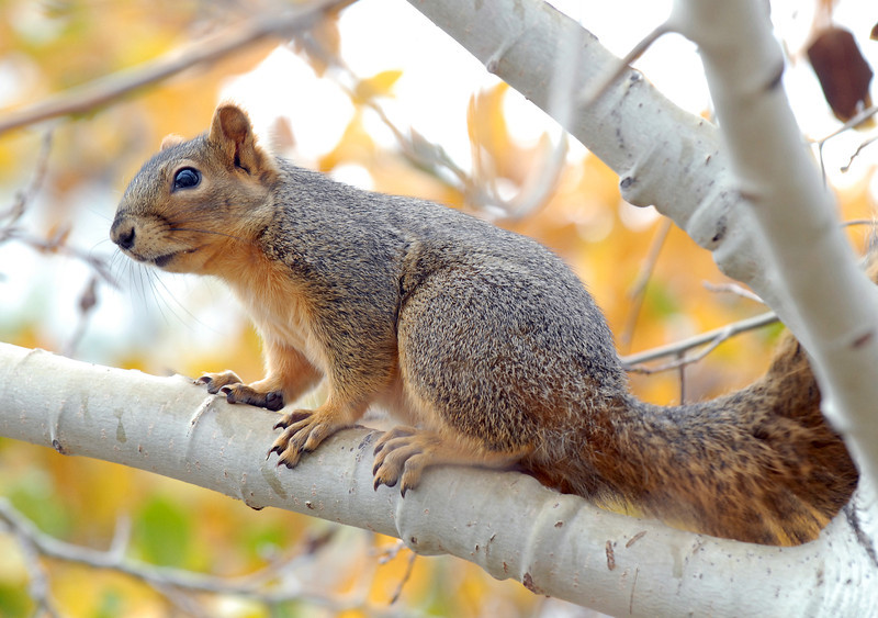 20081111_SQUIRREL