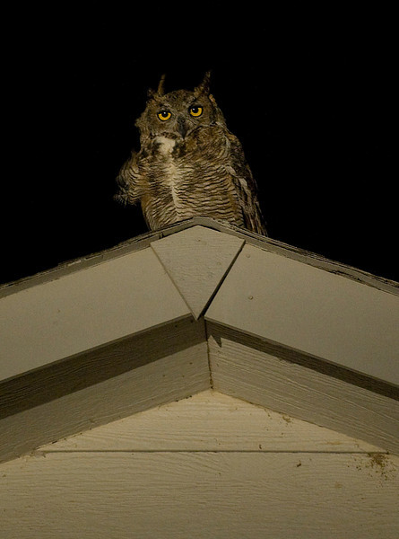 20090823_OWL