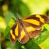 Butterfly / Beaks