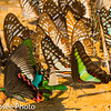 Mixed Butterfly Group,