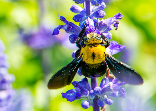 Bees, Wasps, Flies