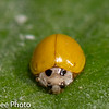 Insect / Beetle