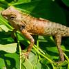 Reptile,