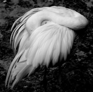 BIRD FLAMINGO 2