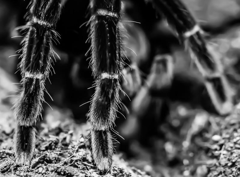 BF SPIDER 3