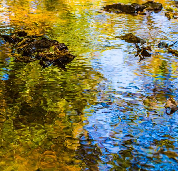 FALL REFLECTIONS 2014  2