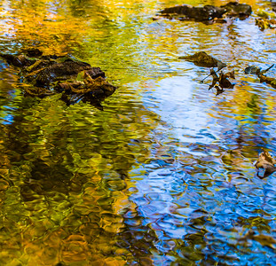 FALL REFLECTIONS 2014  2