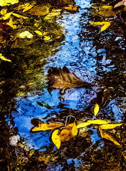 FALL REFLECTIONS 2014  15