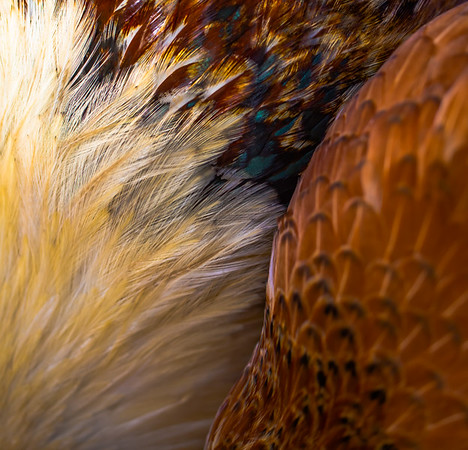 FOWL & FEATHER 5