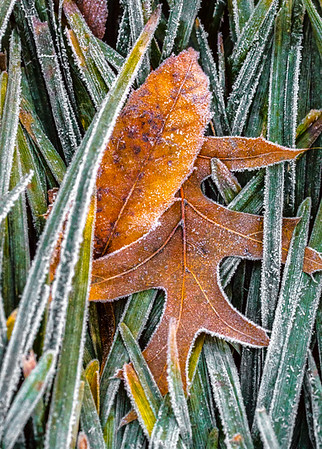 LAST FROST  1