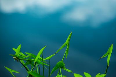GREEN ARROWS 3