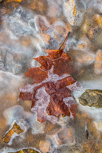 FROZEN LEAF 13