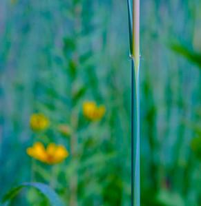 TALL GRASS 7