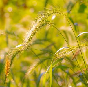 TALL GRASS 4