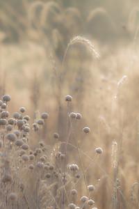 TALL GRASS 21