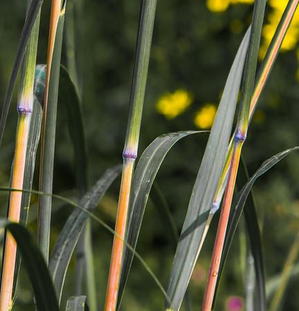 TALL GRASS 10