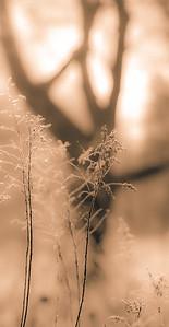 TALL GRASS 23