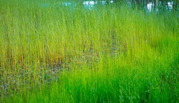 June 1 2014 Nature 20