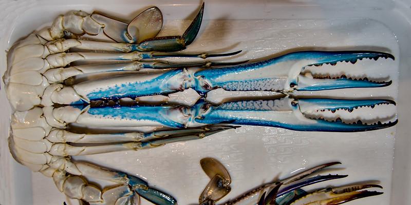 Blue Swimmer Crab. Portunus armatus