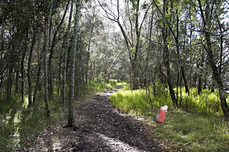 Galah in Country Walk - Landscape. Original exclusive stock photo art