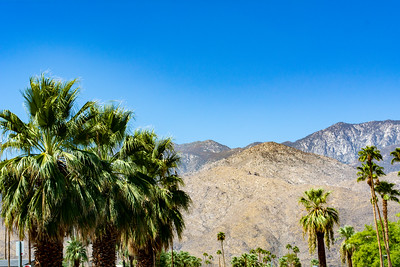 Mountain And Palm Tree