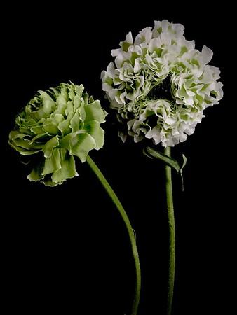 BF: White & Green Anemones