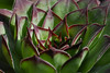 Fat plant(?), particular