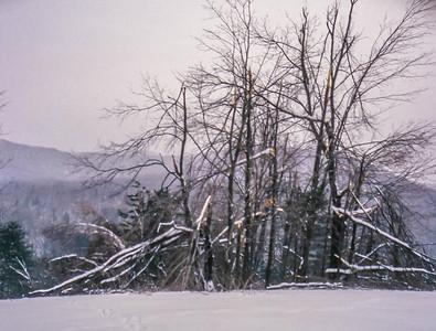 Ice Storm, January 1998