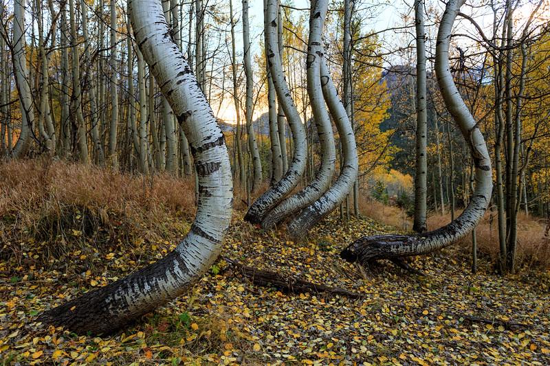Bent on Autumn