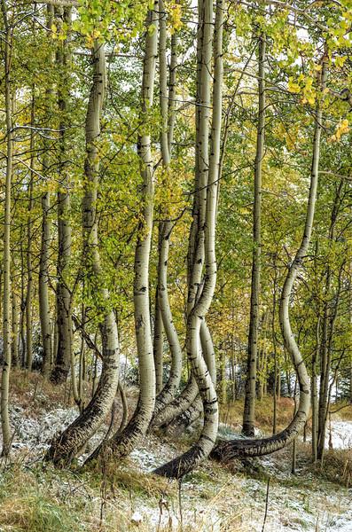 Bent Between Seasons