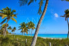Key west florida Smathers beach palm trees US