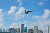 Miami downtown skyline with seagull flying Florida